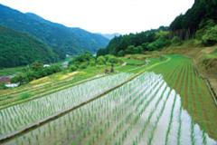 原風景を残した美しい山村